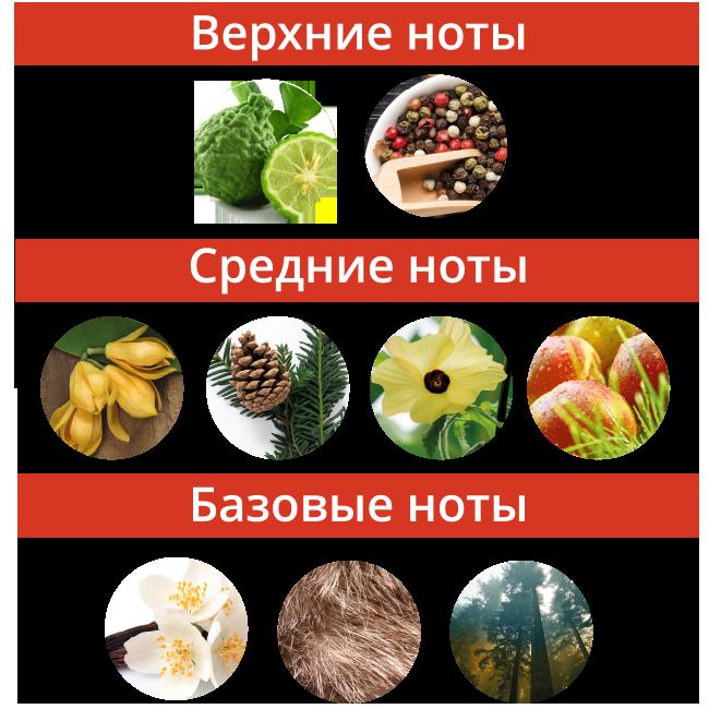 Noty_Avantyurin2.png