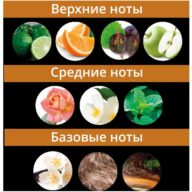 Ноты_Тигровый-глаз.png